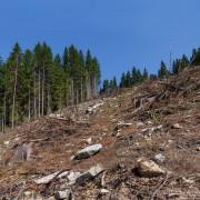 La finance peut, et doit, lutter contre la dégradation des terres