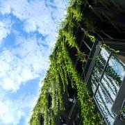 Mirova: sulla sostenibilità non fermiamoci alla forma