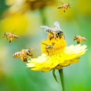 Biodiversité : la pièce manquante du puzzle ESG