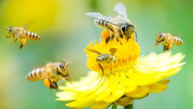 Biodiversity: The Missing Piece in the ESG Puzzle